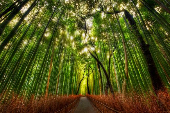 زیباترین جنگل های جهان